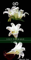Lily Photo Stock Pack
