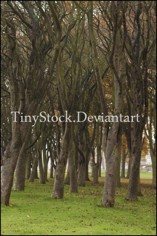 Tree 3 by TinyStock
