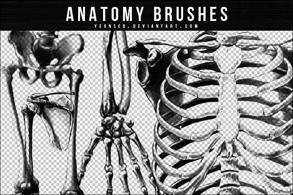 ANATOMY BRUSHES by Yeonseb