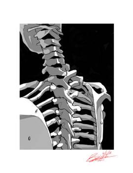 Skeleman Study