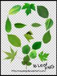 PNG / leaf 16P