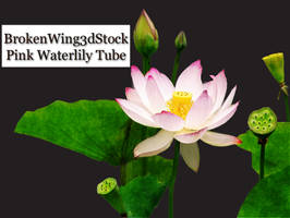 Pink Waterlily Tube by BrokenWing3dStock