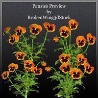 Pansies by BrokenWing3dStock