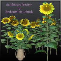 Sunflowers by BrokenWing3dStock