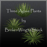 Three Agave Plants