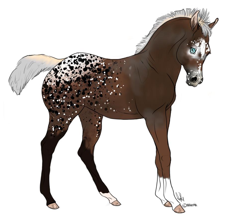 Adoptable Foal