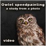 owlet speedpainting