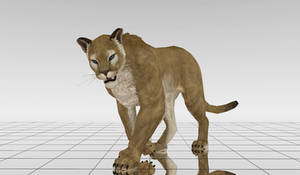 MMD Puma DL