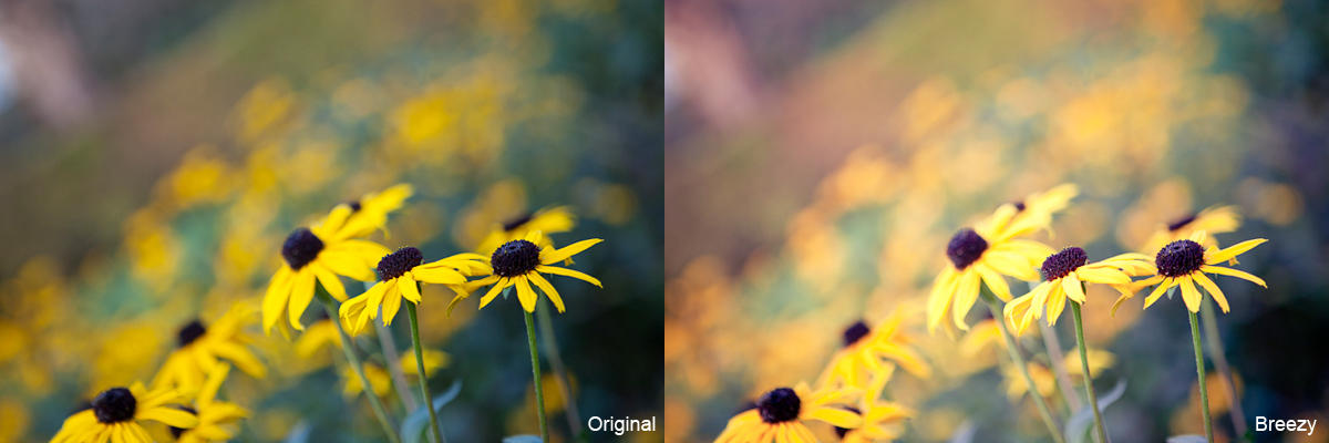 Breezy Lightroom Preset - FREEBIE by Lady-Tori