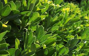 Sunny Green by Pierre-Lagarde