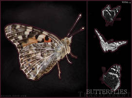 Transparent Butterfly Stock