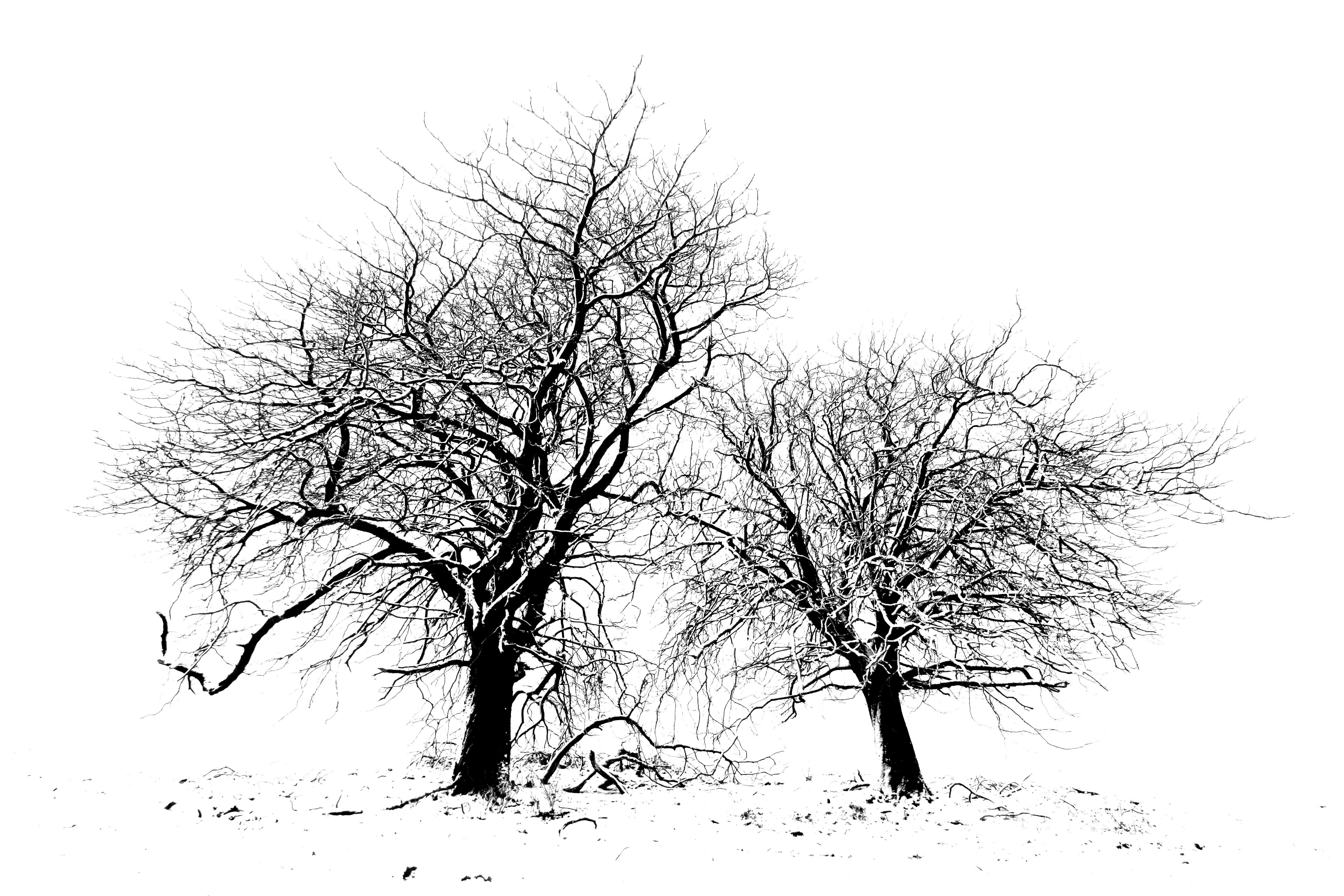 Brush TwoTrees