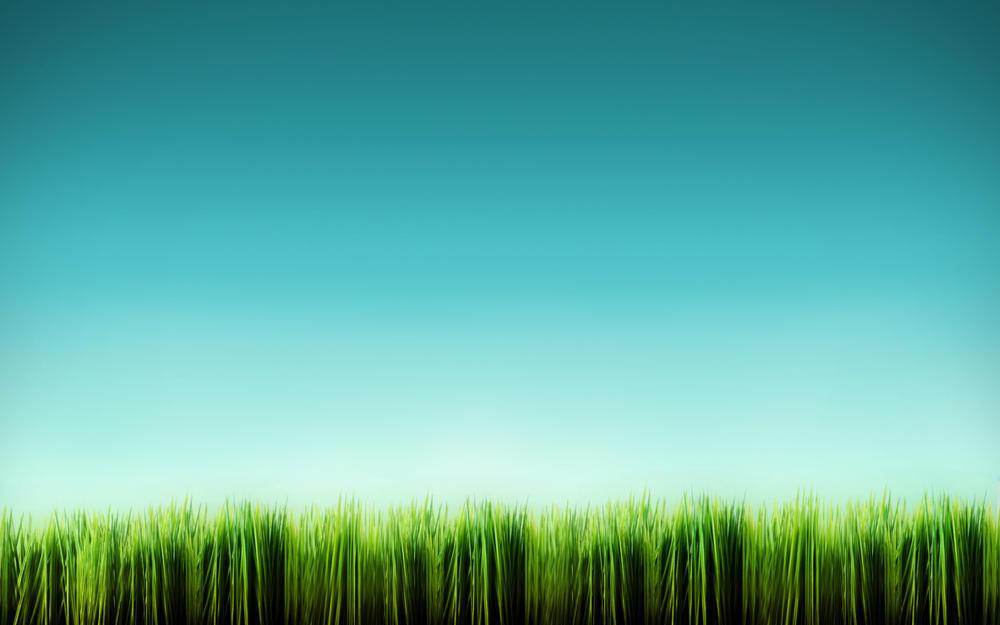 Grass Blades by javierocasio