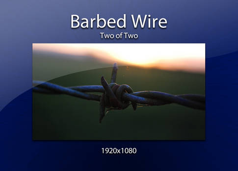 Barbed Wire up close