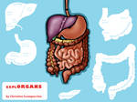 Interactive Digestive System