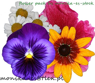 flower pack psd by monika-es-stock