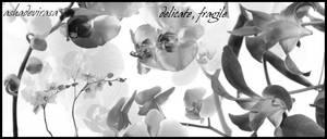 delicate, fragile