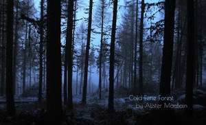 Cold Eerie Forest