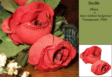 Red Roses Stock by allison731