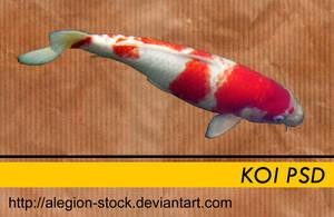 Koi PSD by Alegion-stock