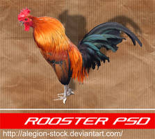 Rooster PSD by Alegion-stock