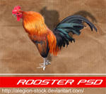 Rooster PSD