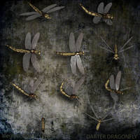 Dragonfly PNG Stock Pack