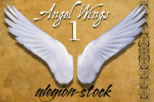 Angel Wings 1 PNG Stock by Alegion-stock