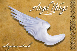 Angel Wings 2 PNG Stock by Alegion-stock