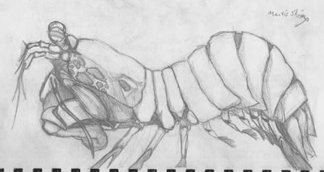 mantis shrimp!