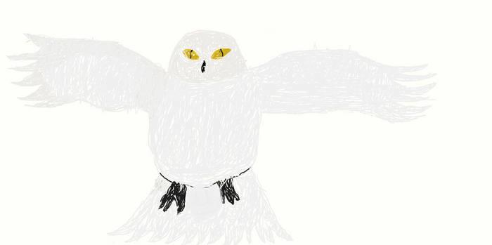 Snowy Owl for Owl