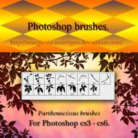 Parthenocissus brushes
