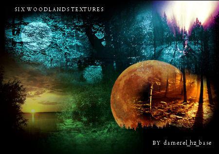 Large Woodlands Textures by damerel