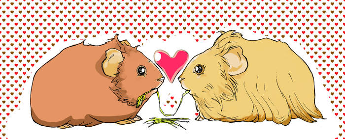 Guinea pigs in love by Viveritt