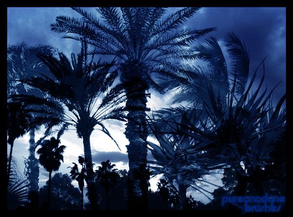 Palm Tree Brush Set