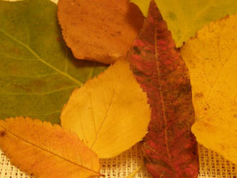 Autumn 01 by Gwathiell