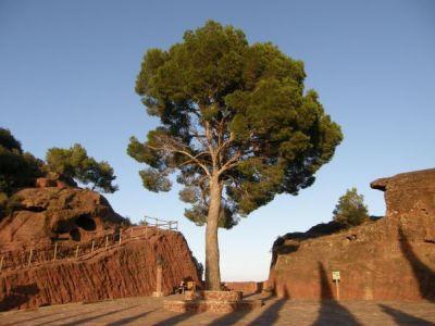 Spain Sa58 ExclStock Tree by Gwathiell