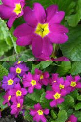 BB1 - Pink flowers by Gwathiell