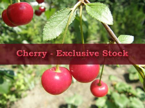 ExclStock Cherry