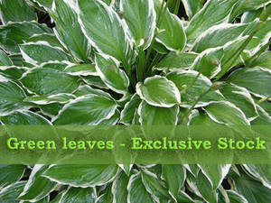 ExclStock GreenLeaves
