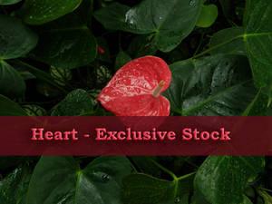 ExclStock Heart