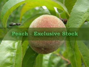 ExclStock Peach