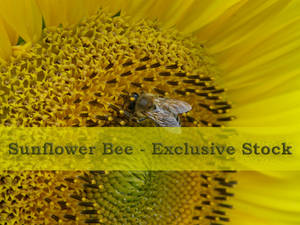 ExclStock Sunflower Bee