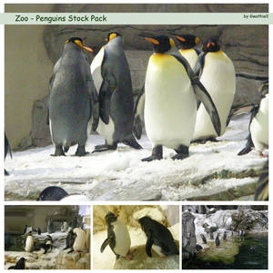 Zoo - Penguins Pack