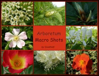 Arboretum - Macro Shots Pack by Gwathiell