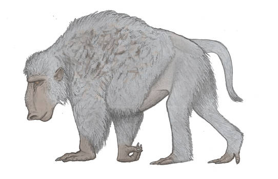Baboon Bison