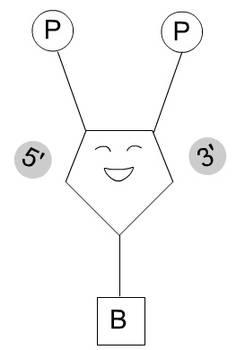 DNA Dansen