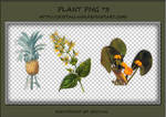 PNG PACK#4 - Plant