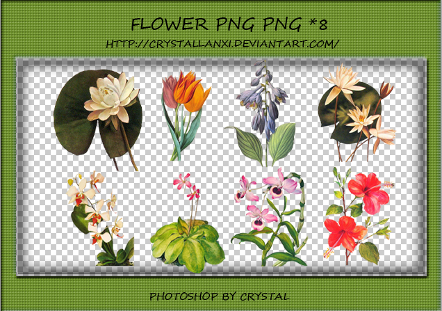PNG PACK#5 - Plant by Crystallanxi