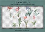 PNG PACK#6 - Plant